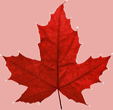 canada-leafs