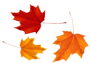 加拿大枫叶